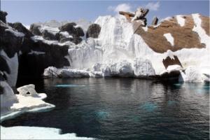 Becken der Beluga Wale