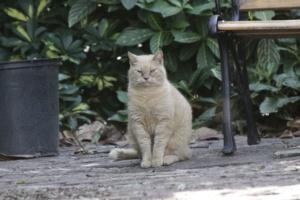 Hemingway Katze