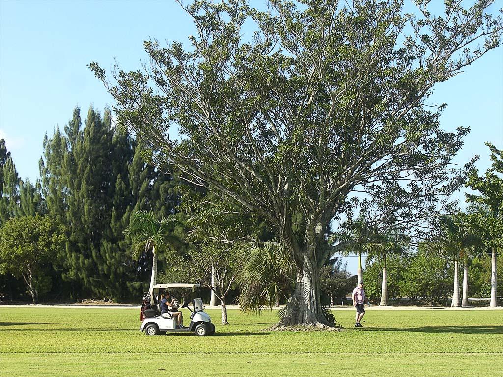 Mit Golfcart unterwegs