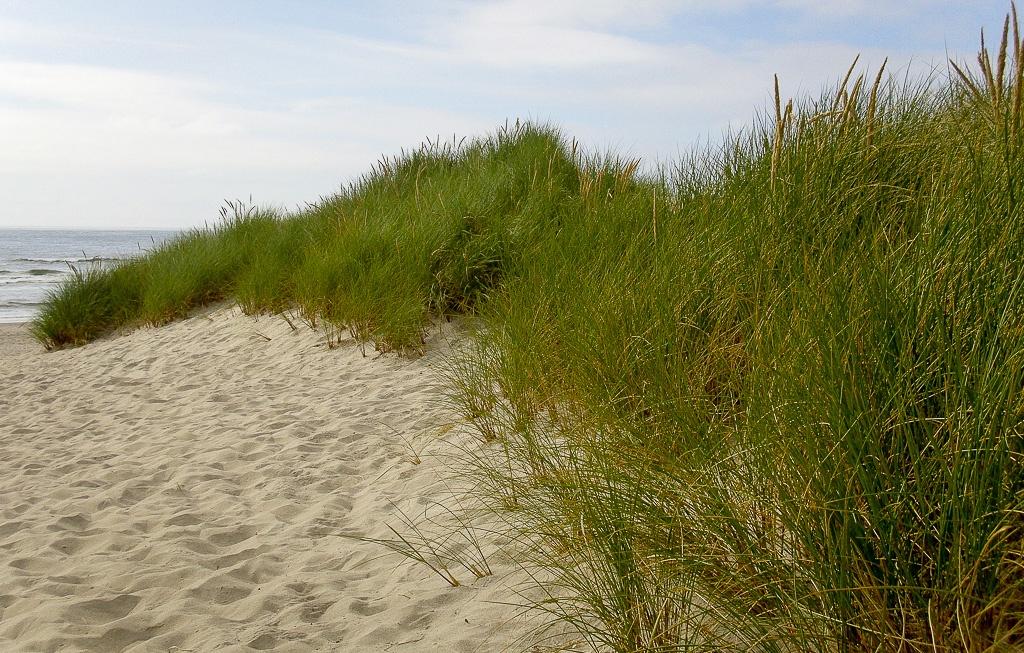 Windschutz durch natürliche Dünen