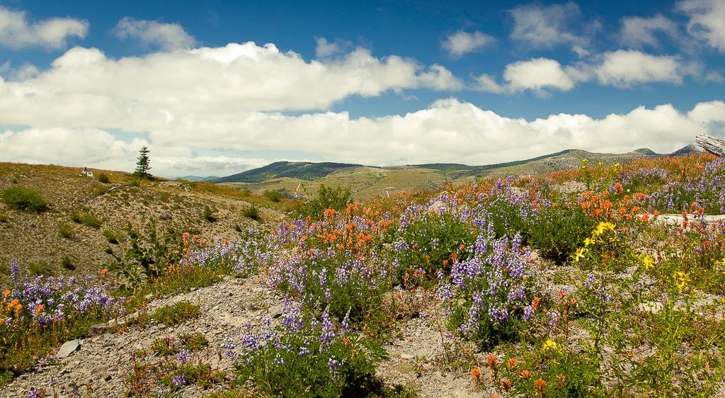 alpine Blumen gibt es wieder hier