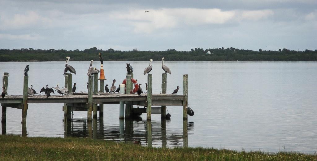 Pelikane und andere Seevögel